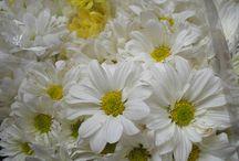 FLORES FRESCAS CARACAS VENEZUELA . DECORACION BODAS / Las mas bellas flores frescas producidas por y para venezolanos.  Muy orgullosos del gran esfuerzo que hacen los floricultores venezolanos para surtir con flores las decoraciones de bodas en Caracas.
