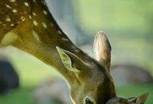 Cute animals ♥♥