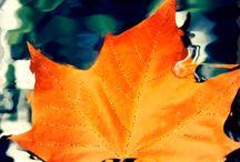 outono... Herbst... outunn