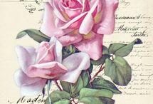 Grafika - kwiaty