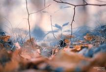 Naturfotografier