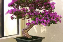 bonsai / by OLIVE ROSE