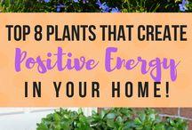 plante pozitive