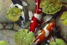 Пруд, лотосы и рыбки