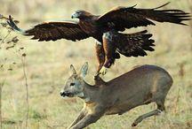 vadászás