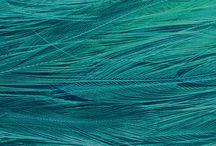 plumas verdes para posible trabajo de mi proyecto