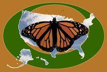 Butterfly Websites
