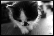 Chat / Portraits de chats et chatons copyright Roxane Soussiel Photographe