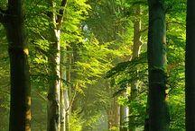 Деревья и леса