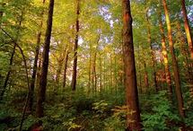 North American Forests