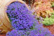 Garden & other