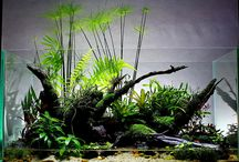 "Paludarium / A paludarium is neither an aquarium with some wood sticking out the top, nor is it a terrarium (with or without a ""damp"" spot. A paludarium needs to have a water area AND a land area, both fully developed!"