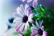 Beautiful Flowers / ''The earth laughs in flowers.'' Ralph Waldo Emerson