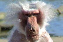 monkey / mono