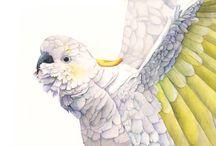 Art - Birds in paintings