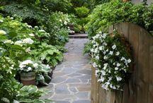 zahradaa