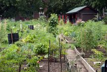 Thèmes : jardins communautaires