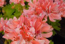Bitki-çiçek