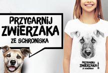 schronisko / psy i koty