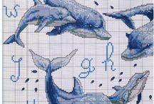 delfiny xxx