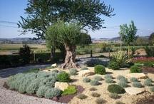 casa_garden