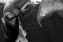 Mermaids n Sirens