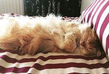 Love cats ❤️