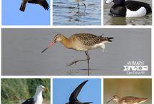 Birds - Ria Formosa Natural Park / 0
