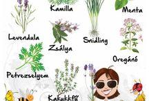 Kerti kisokos / Kerti kisokos, kertészkedés, kertgondozás, hobbi kert, kert, növénygondozás https://balkonada.hu/ http://balkonada.cafeblog.hu