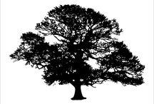 TREE SILHOUETTE / Tree Silhouette Graphics