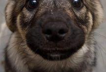Cachorrinho