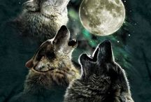 Three [...] Moon / Parodies of the Three Wolf Moon Shirt. / by Allison Matus
