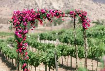 Arch Inspirations / Beautiful arch inspirations for weddings.