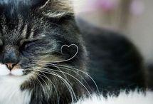 gatos, minha paixão!
