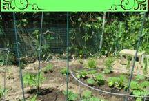 Ogrodniczy poradnik