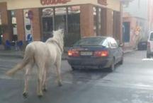 Θεσσαλονίκη: Έβγαλε βόλτα το άλογο... με το αυτοκίνητο - ΒΙΝΤΕΟ
