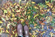 Autumn/ Fall