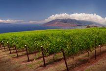 Vineyards in the world