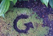 "G Gallery / Girl champs are pretty creative. Send me your ""G"" and I'll post it: info@girleffect.org. / by The Girl Effect"