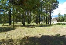 680 Oakwood Circle, Pagosa Springs, CO 81147 / Listing Broker - Shelley Low This is a perfect lot and the SELLER WILL OWNER FINANCE! Tap fees have been paid per PAWSD and this lot is ready to go. Corner lot, on cul-de-sac & treed with some views. Source gas is near (not on this lot, but close) along with water and sewer. Close to town and a great neighborhood.. This is all at a super reasonable price.