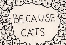 because cats / by Kimball Tingey