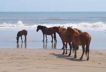 Natureza cavalos ... horses...