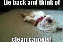 Funny Carpet bear carpet inc. (bearcarpet) on pinterest