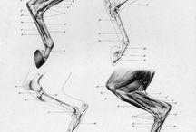 骨格と筋肉:人間