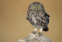 Wildlife photography / Fotografía de naturaleza..