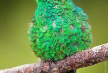 Πουλάκι πράσινο