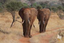 Africa Travel Photos