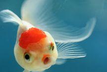 Aquatic life / Aquatic life
