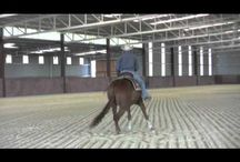 {Horses: Training} / Any type of exercises, quotes, or ideas that I can use in training! / by Emma Knight