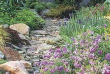 Garden - Dry creek landscaping